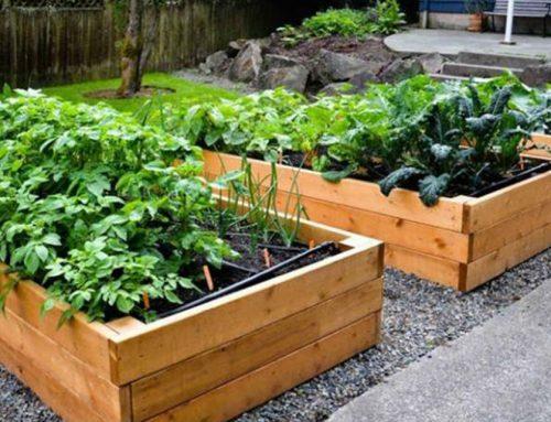 Consejos para tener tu propio huerto urbano